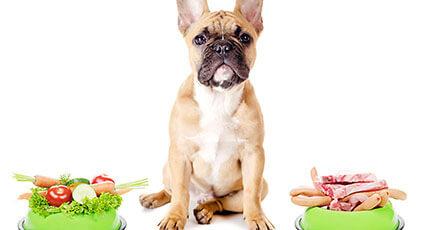 Ghid pentru alimentatia echilibrata a animalului de companie