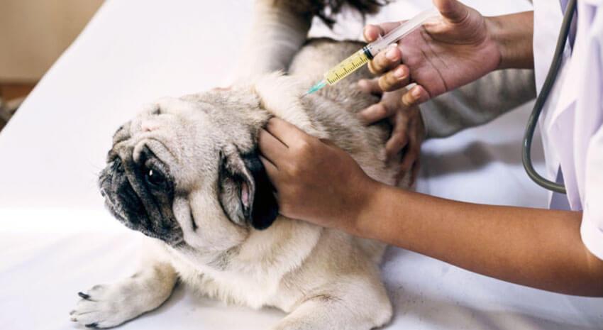 Vaccin caine
